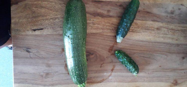 Unsere Gartenernte  die Erste :)