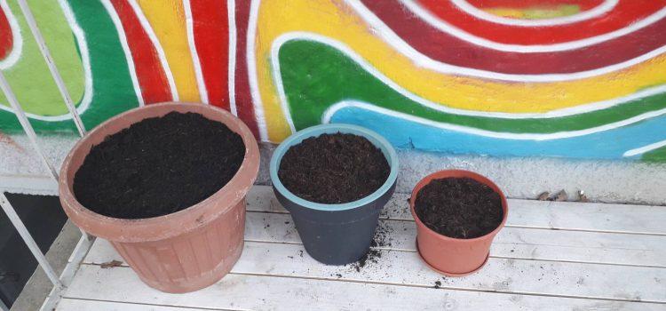 die ersten Sonnenstrahlen und der Garten wird vorbereitet auf das kommende  Garten-Jahr :)